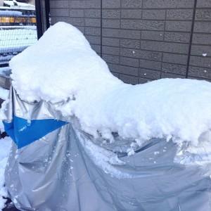 京都積雪_3日朝1